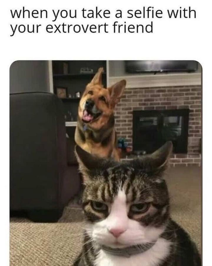 "75 Introvert Memes - ""When you take a selfie with your extrovert friend."""