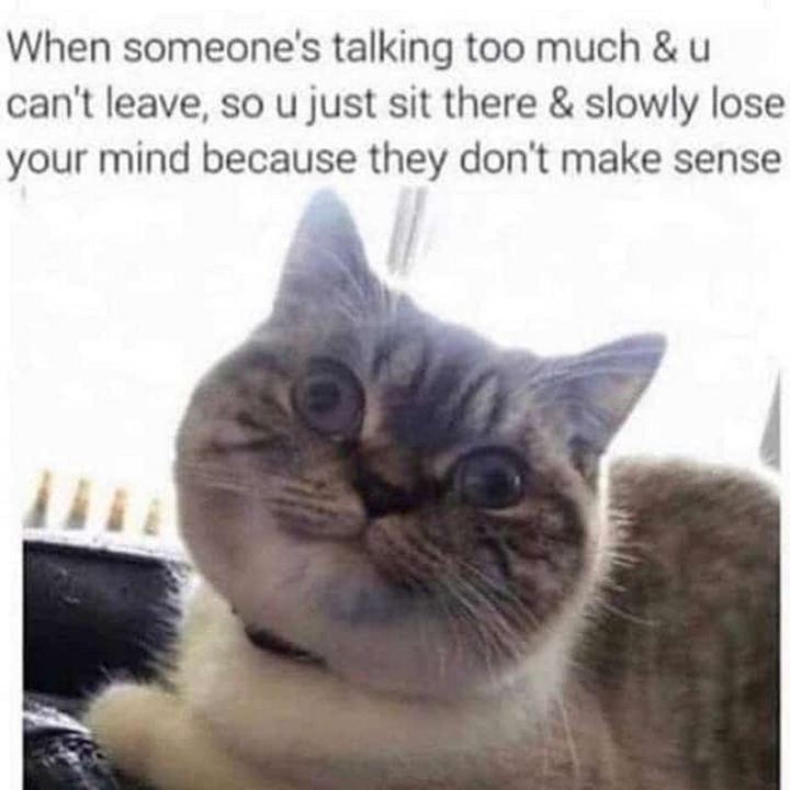 "75 Introvert Memes - ""When someone's talking too much and u can't leave, so u just sit there and slowly lose your mind because they don't make sense."""