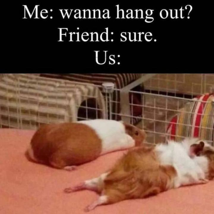 "75 Introvert Memes - ""Me: Wanna hang out? Friend: Sure. Us:"""