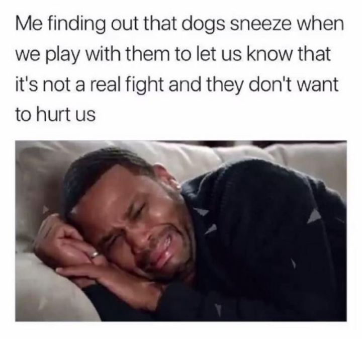 "53 Sad Memes - ""Me finding out that dogs sneeze when we play with them to let us know that it's not a real fight and they don't want to hurt us."""