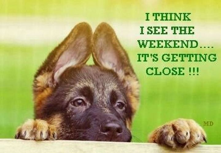 "55 ""Almost Friday"" Memes - ""I think I see the weekend...It's getting close!!!"""