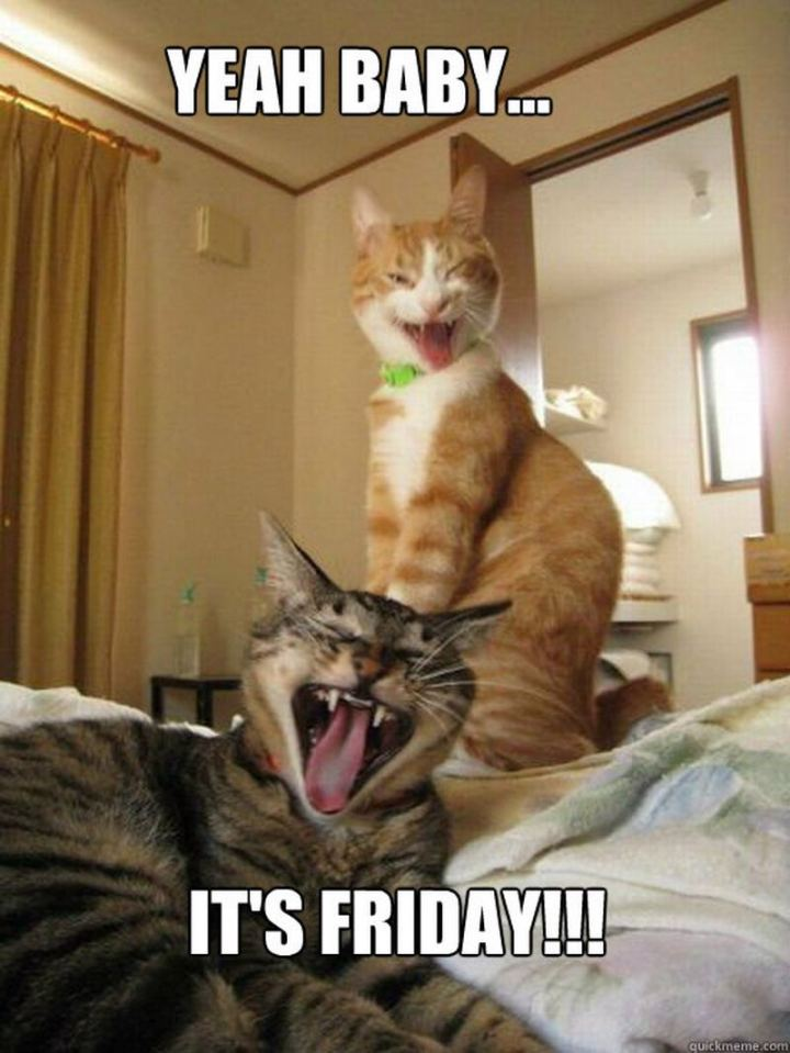 "55 ""Almost Friday"" Memes - ""Yeah baby...It's Friday!!!"""