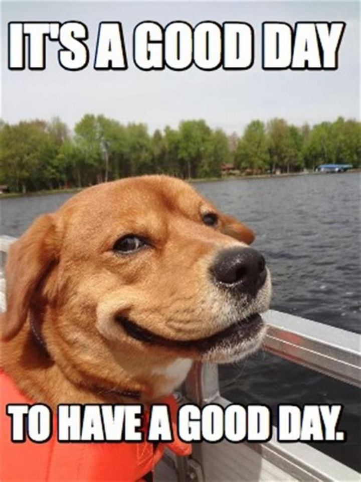 "101 ""Have a Great Day"" Memes - ""It's a good day to have a good day."""