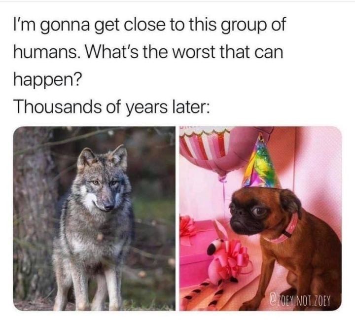 "55 Funny History Memes - ""I'm gonna get close to this group of humans. What's the worst that can happen? Thousands of years later:"""