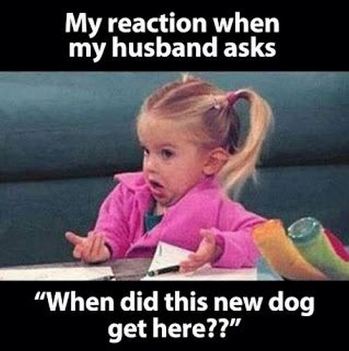 """""""My reaction when my husband asks 'When did this new dog get here??'"""""""