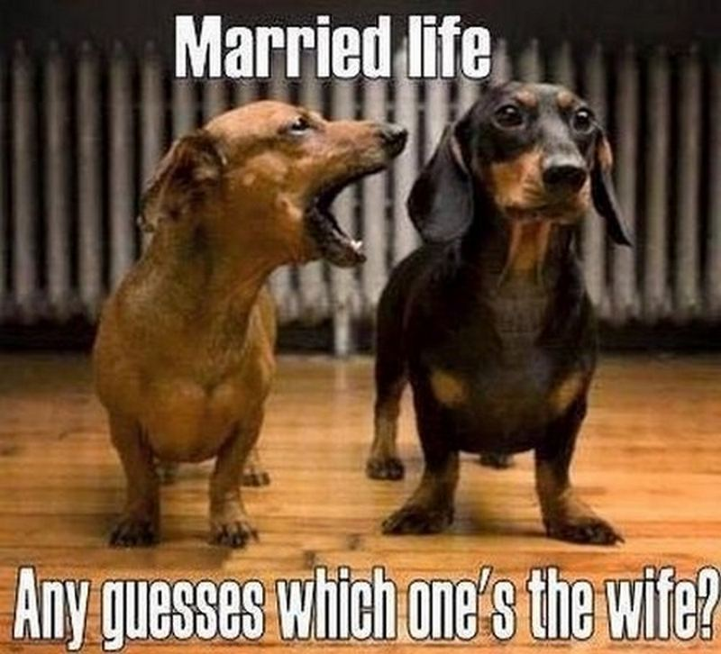 """Married life. Any guesses which one's the wife?"""