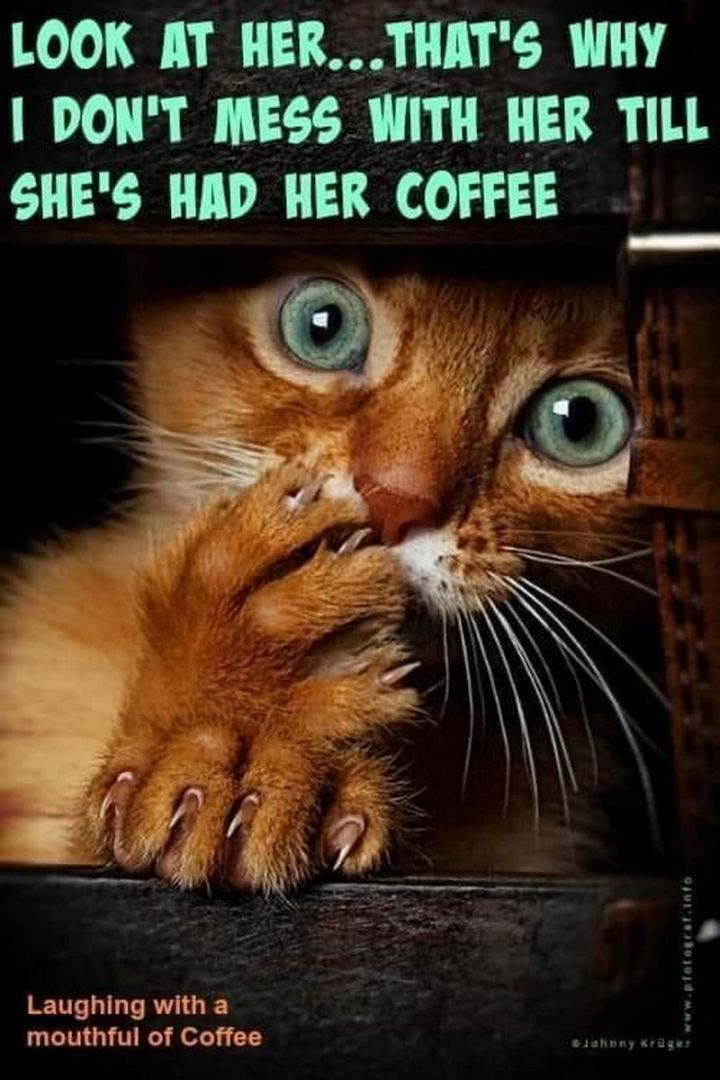 """Look at her...That's why I don't mess with her till she's had her coffee."""