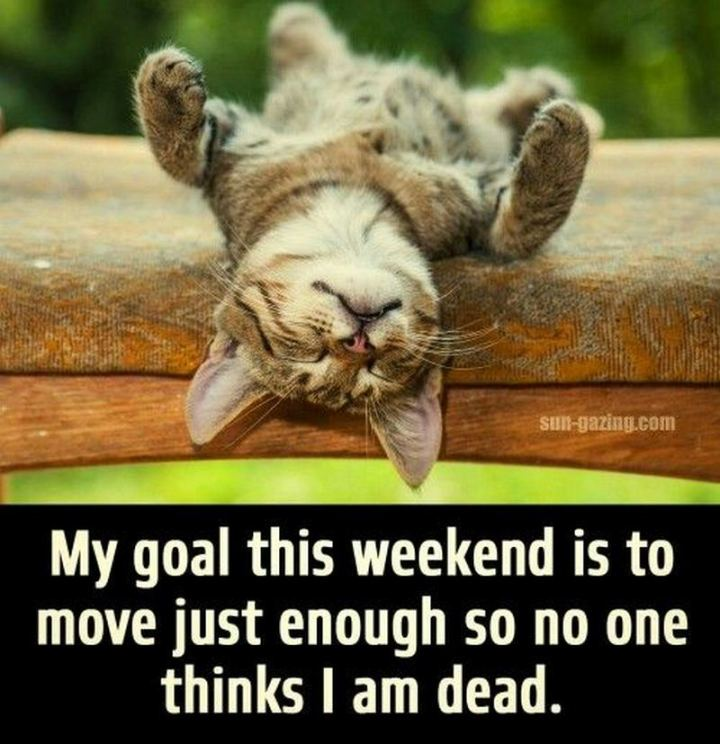 """My goal this weekend is to move just enough so no one thinks I am dead."""