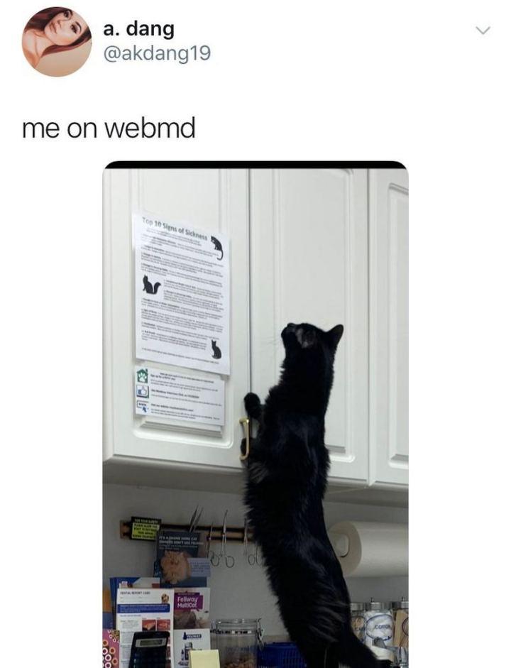 "67 Hypochondriac Memes - ""Me on WebMD."""