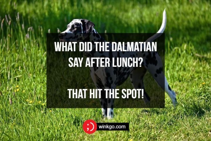 71 Two-Line Funny Jokes - What did the Dalmatian say after lunch? That hit the spot!