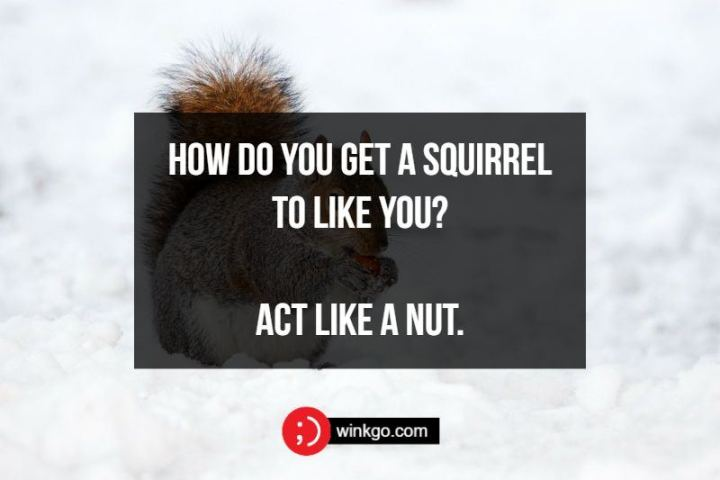 71 Two-Line Funny Jokes - How do you get a squirrel to like you? Act like a nut.