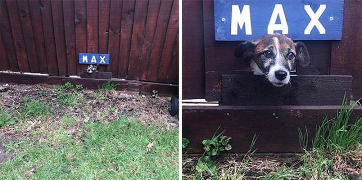 """Dogspotting: """"My friend moved into a new house and right around the corner was this guy! We saw a tiny hole with a name above and figured it was a doggy lookout, so we called the name and this wee face popped up. His owners had made a space in the fence for him to say hi to people walking past."""""""