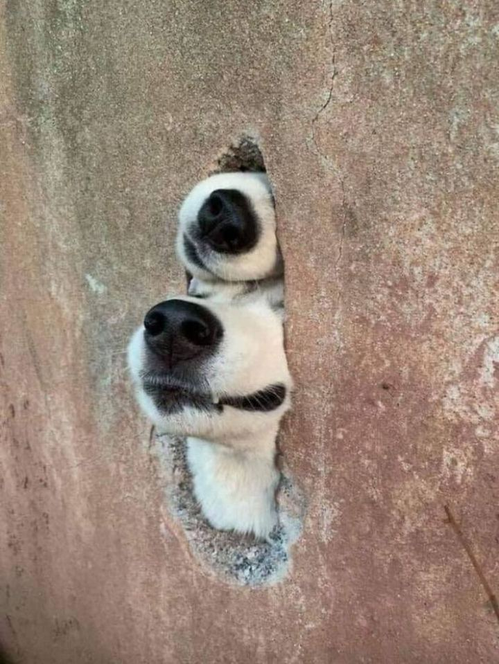 """""""Not sure if they saw me."""""""