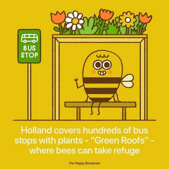 """Holland covers hundreds of bus stops with plants - 'Green Roofs' - where bees can take refuge."""
