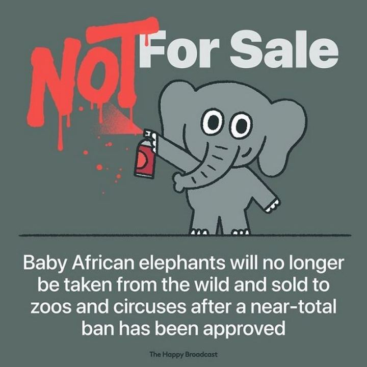 "The Happy Broadcast - ""Baby African elephants will no longer be taken from the wild and sold to zoos and circuses after a near-total ban has been approved."""