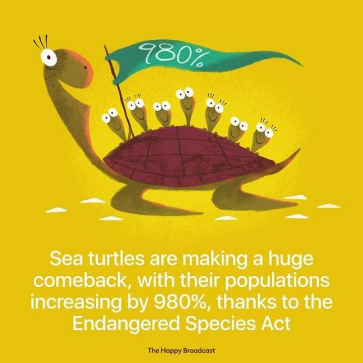 """Sea turtles are making a huge comeback, with their populations increasing by 980%, thanks to the Endangered Species Act."""