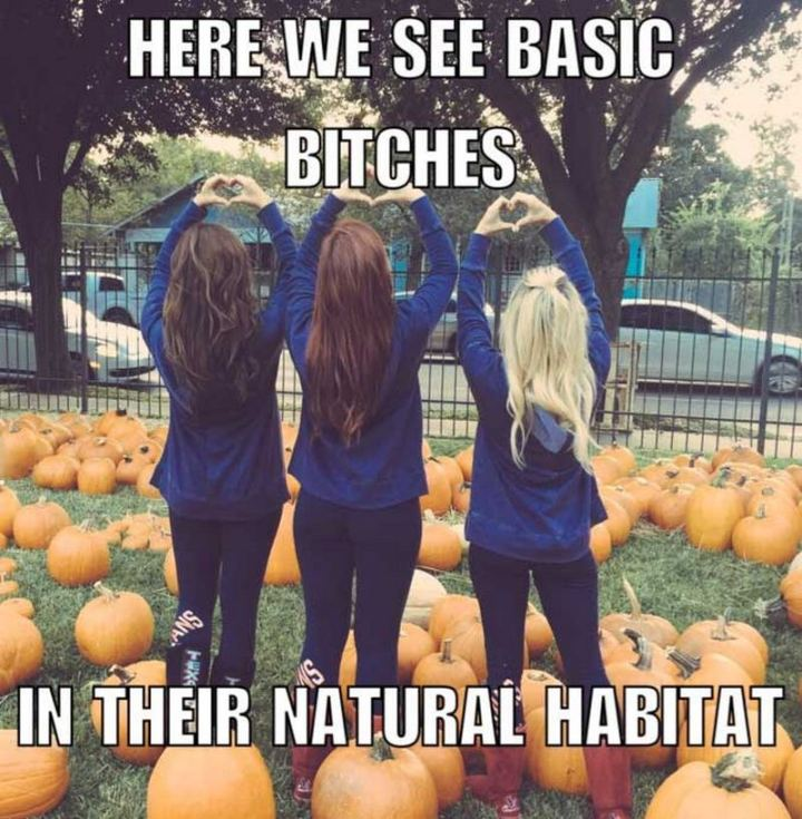 """""""Here we see basic [censored] bitches in their natural habitat."""""""
