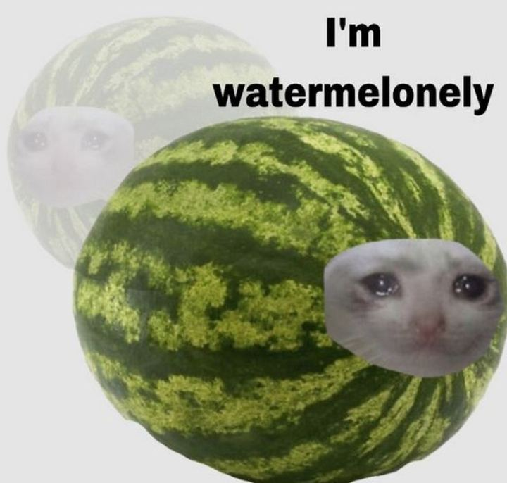 "29 Funny Crying Cat Memes - ""I'm watermelonely."""