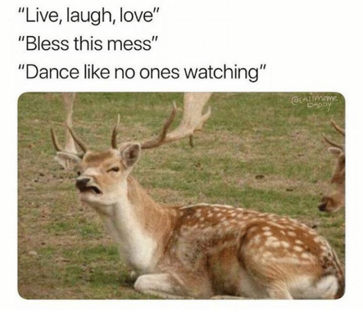 """""""Live, laugh, love. Bless this mess. Dance like no ones watching."""""""