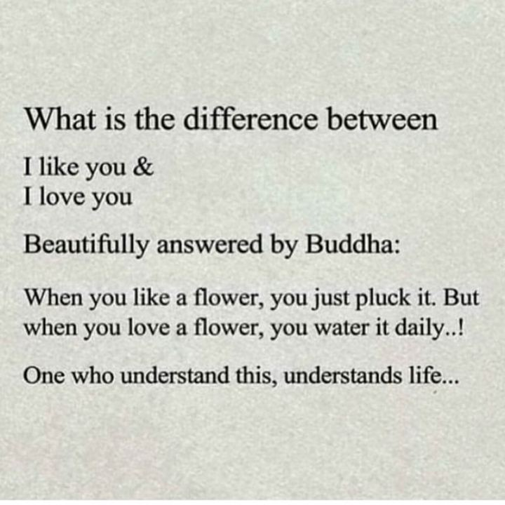 """35 """"I Like You"""" Memes - """"What is the difference between I like you and I love you? Beautifully answered by Buddha: When you like a flower, you just pluck it. But when you love a flower, you water it daily..! One who understands this understands life..."""""""