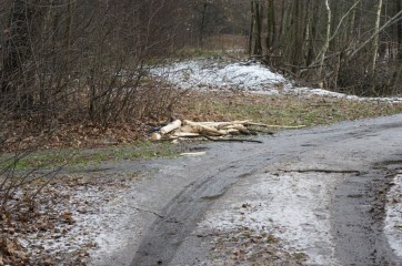 Remains of the tree that was felled across the road