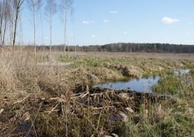 A new dam?