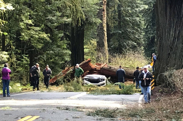 Parents of 5 killed when redwood tree falls on their car in California