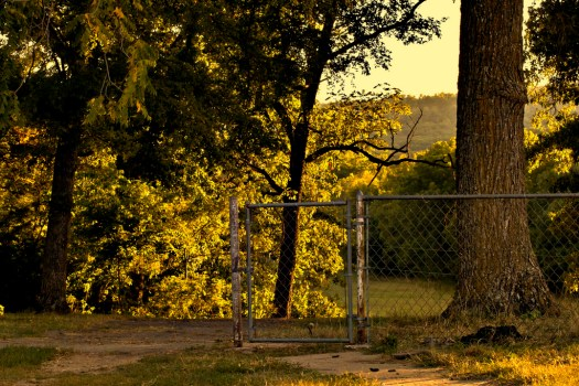 fence tree yard