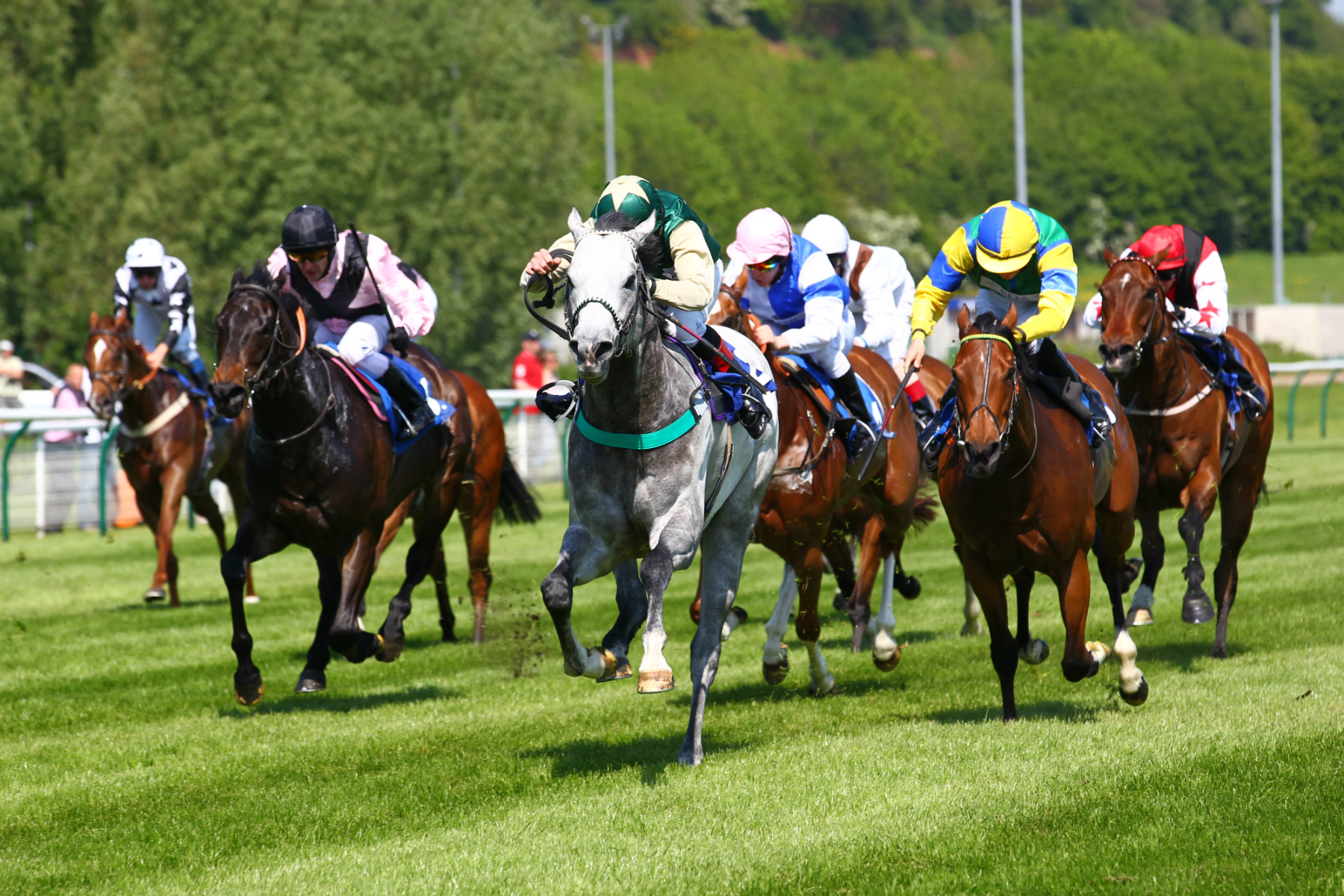 Types Of Horse Race