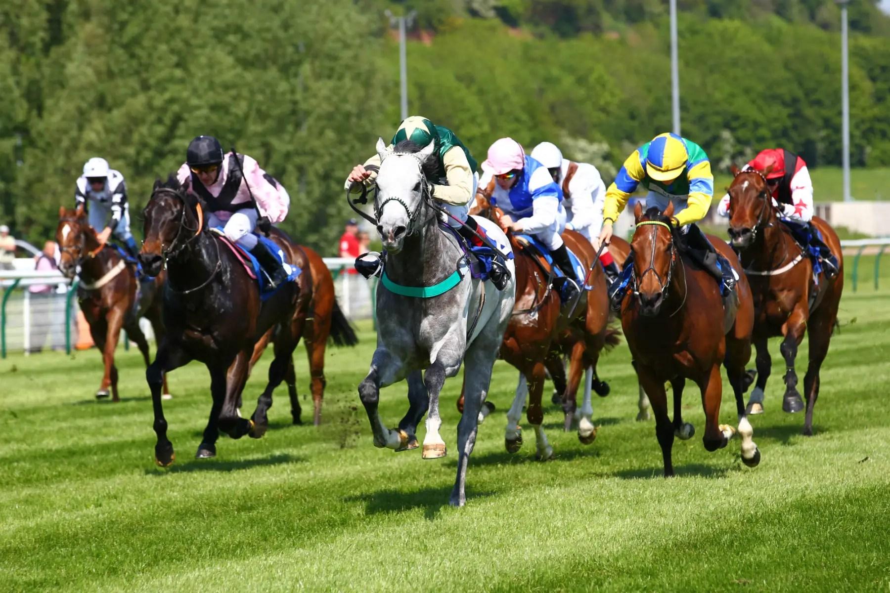 Starting Price Horse Racing