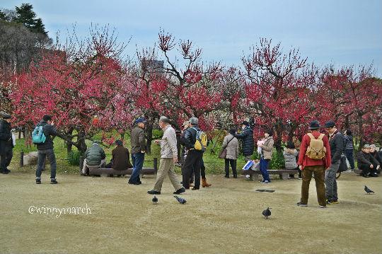 Taman Osaka Castle
