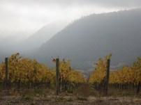 Autumn in the vineyard!