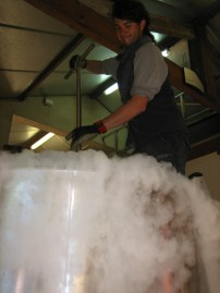 Arturo doing a punchdown with some dry ice for temperature control and protection of the juice.