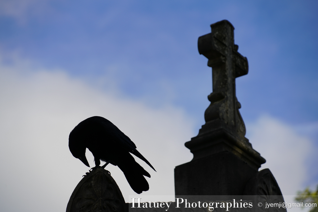 Père Lachaise, Cimetière, Cemetery, Animaux, Art Funéraire, Cimetière du Père Lachaise, Corbeaux, France, Friedhof, Hatuey Photographies, Lachaise, Oiseaux, Paris, cimitero, graveyard,Crows