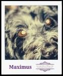 Our Dog Maximus Earns His Keep With A Few Daily Tasks #SubaruBP