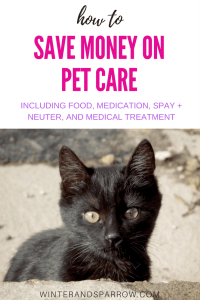 How To Save Money On Pet Care winterandsparrow.com