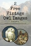 "Two Free Owl Images {Horned Owl and Snowy Owl} + ""The Owl"" Poem by Lord Alfred Tennyson"