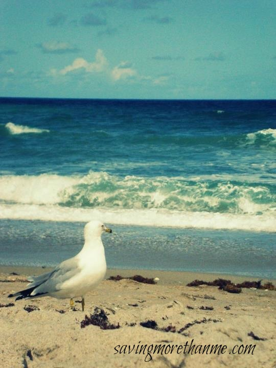 Seagull and Beach The Beauty of South Florida: Beaches, Sunsets, and Palm Trees | winterandsparrow.com #southflorida #floridatravel #sunsetpictures #keywest