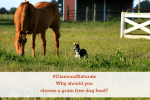Why Should You Choose A Grain Free Dog Food? Let's Find Out! #DiamondNaturals