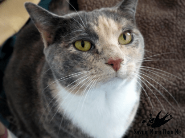 """gracie in front of tv Life Is Better With A Funny Cat Video and A Giveaway {40"""" LG 4K Smart LED TV} #MyPetLovesLG4KTV #ad winterandsparrow.com"""