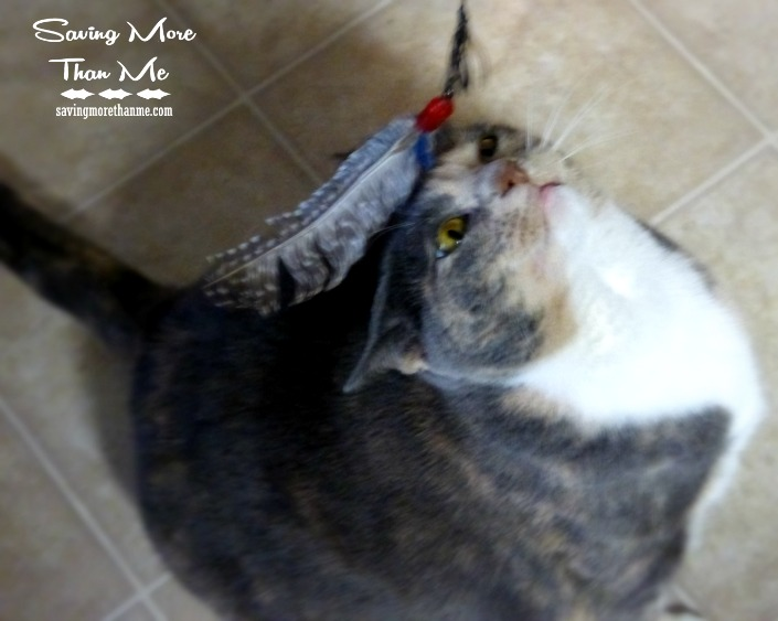 Gracie likes to play Helping Gracie Reach Her Perfect Weight @HillsPet #ad #PerfectWeight winterandsparrow.com