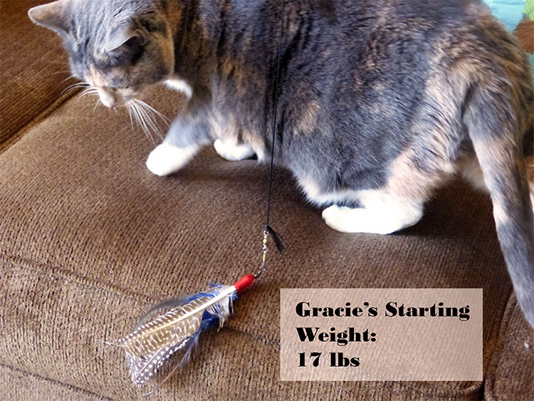 Cat Weight Loss: Gracie Is 1.5lbs Lighter and Friskier {Video Proof + Giveaway} #PerfectWeight #ad winterandsparrow.com