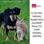 Is Your Pet's Veterinary Hospital AAHA Accredited?