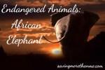 Endangered Animals: African Elephant
