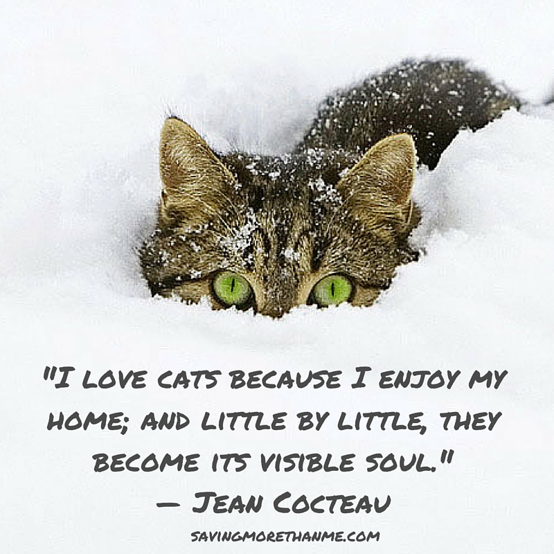 9 Quotes For The Cat Lover winterandsparrow.com