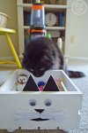 Conquering Cat Messes With A DIY CAT Toy Box