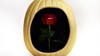 Beauty and the Beast Enchanted Rose Pumpkin