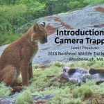 camera trapping presentation at 2016 northeast wildlife trackers conference