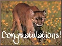 Congratulations Cougar