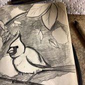 bird, sketchbook, drawing